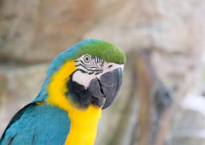Commercialized parrots. Shot this before getting shooed.