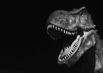 T-rex does what a T-rex do