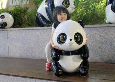 Riding a panda
