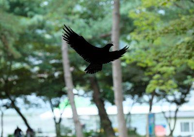 Silhouette of a black eagle...sticker.