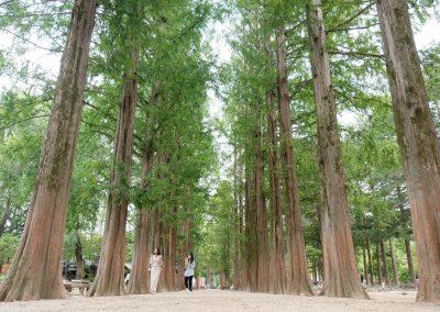 Tall tall nami trees.