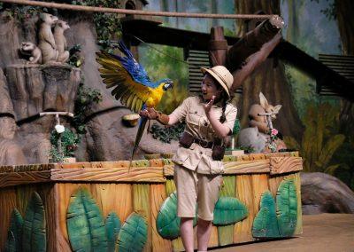 Parrot show